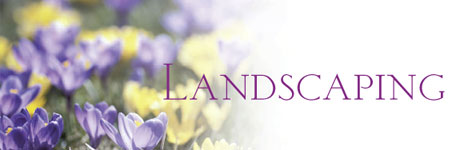 Land Scaping: Grass that Stays Green, Even When Mother Nature Goes Dry...